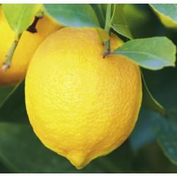 Citrus 4 saisons