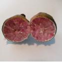 Citrus australasica
