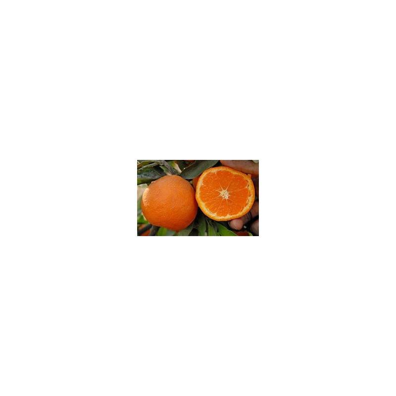Citrus unshiu miyagawa nucellaire