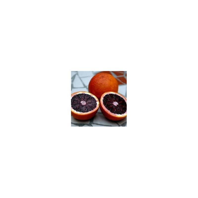 Citrus sinensis fragola