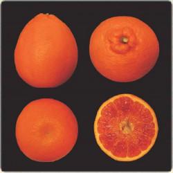 Citrus sinensis tarocco