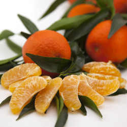 Citrus clementina clemenruby