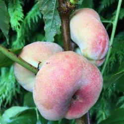 Flat peach peach me donut®