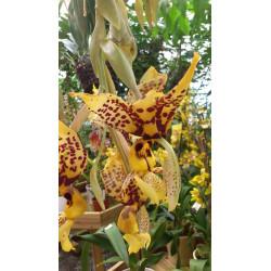 Orchidées d'intérieur