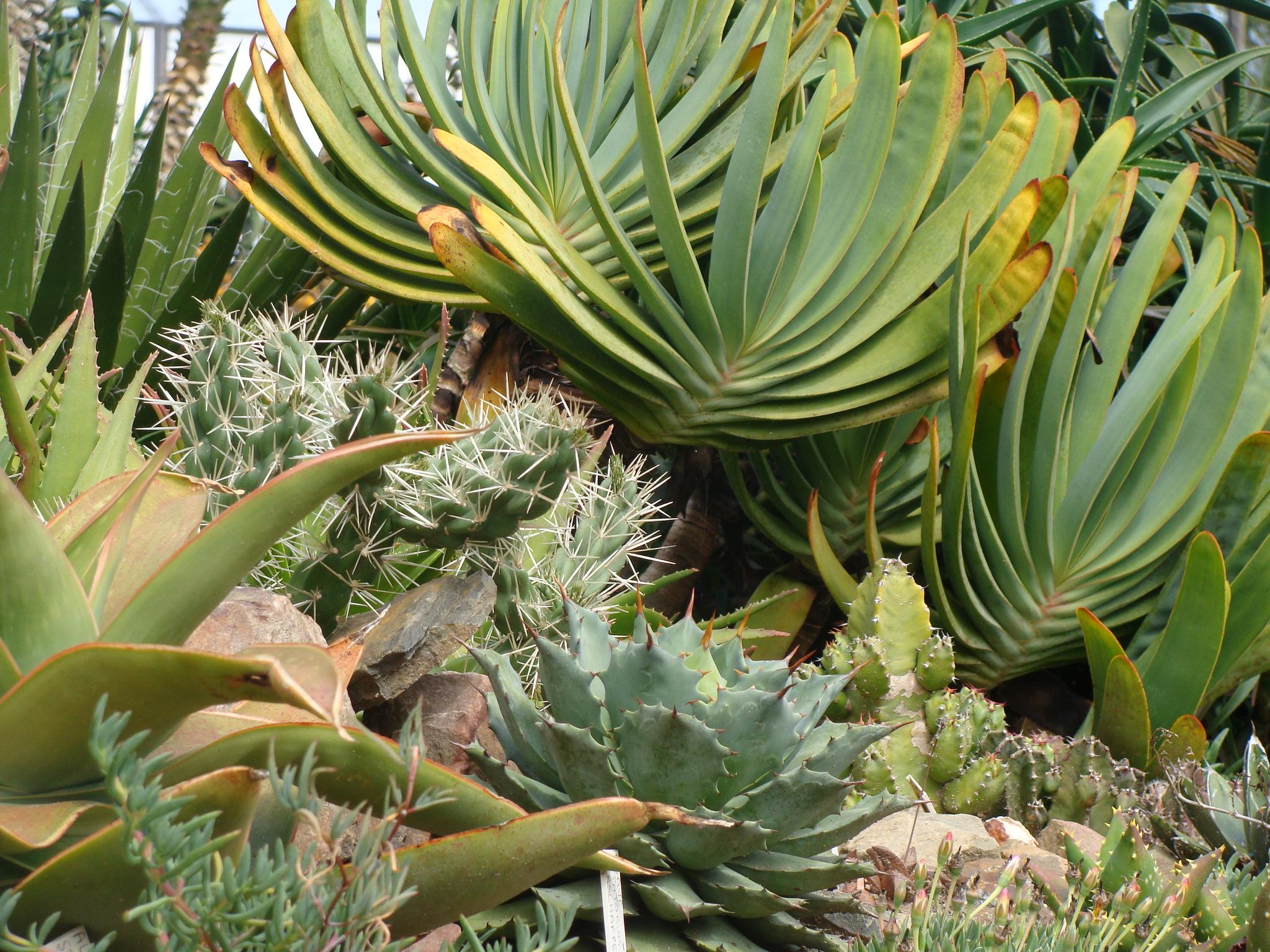 Jardin à Crozon