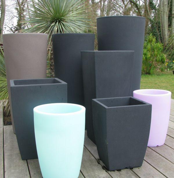 achat vente palmiers vente en ligne de palmiers bananiers yuccas agaves foug res. Black Bedroom Furniture Sets. Home Design Ideas